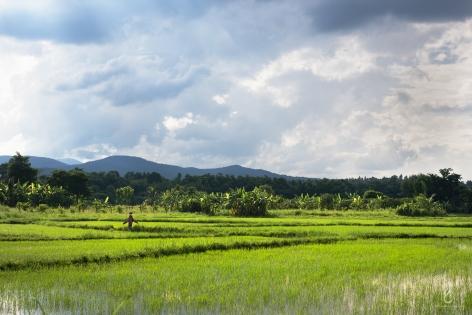 Mae Rim, Chiang Mai