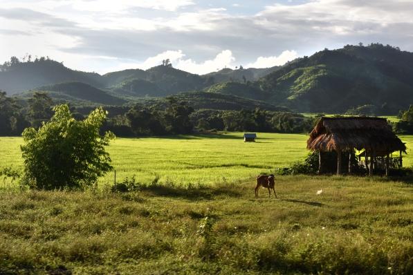 Los paisajes de Laos parecen salidos de un sueño, pero ocultan un lado desgarrador