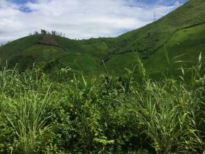 Montañas cubiertas de verde...